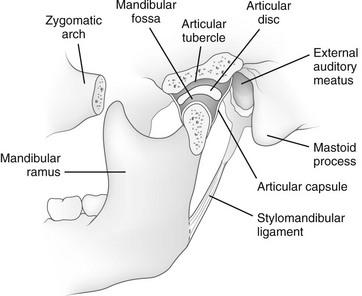 The Mandible | Radiology Key