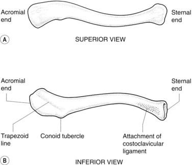 The Upper Limb Radiology Key