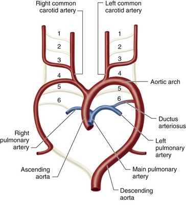 4d56 engine schematic diagram of transmission schematic diagram of fetal circulation patent ductus arteriosus radiology key #12