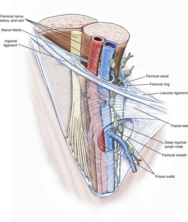 Femoral Triangle Anatomy Choice Image - human body anatomy