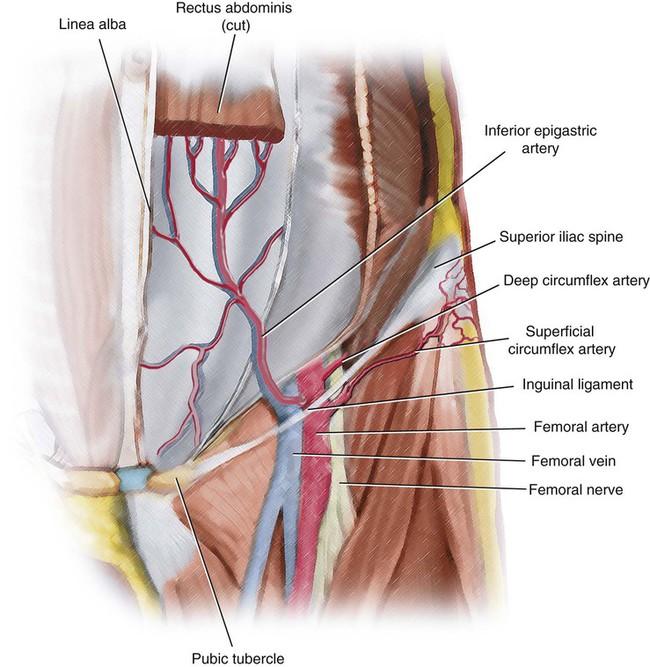 Vascular Anatomy Of The Pelvis Radiology Key