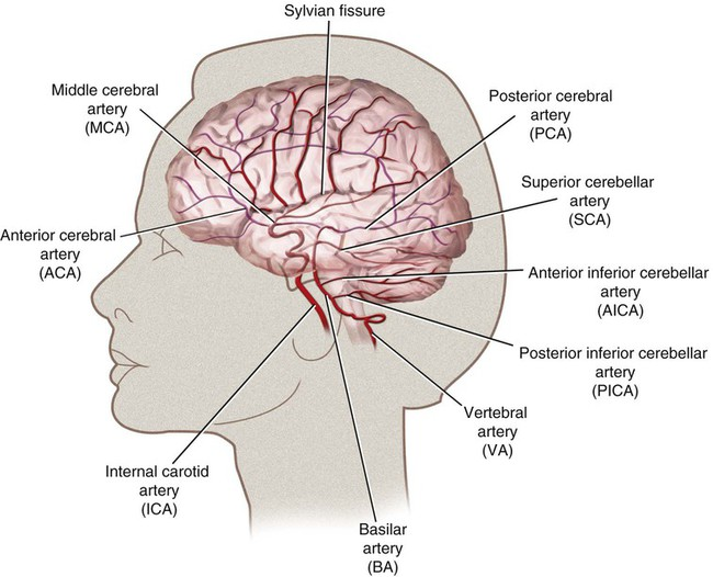 Cerebral Functional Anatomy and Rapid Neurologic Examination ...