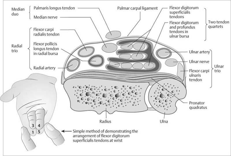 Wrist | Radiology Key