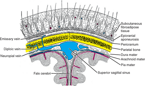 Scalp | Radiology Key