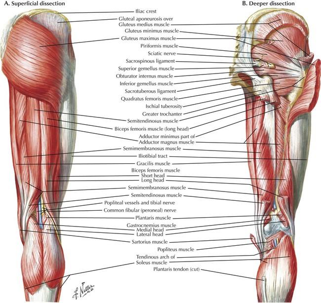 Lower Limbs Radiology Key