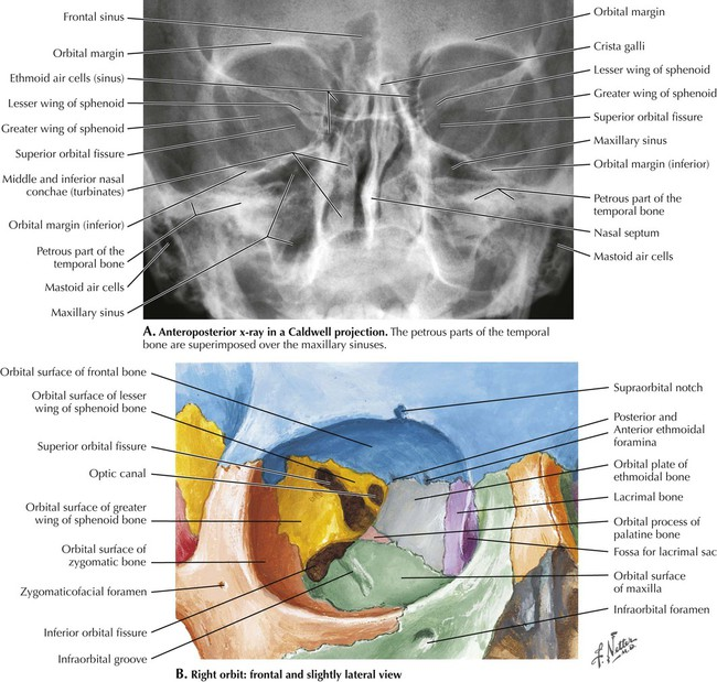 Head and Neck | Radiology Key