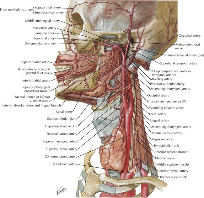 Head And Neck Radiology Key