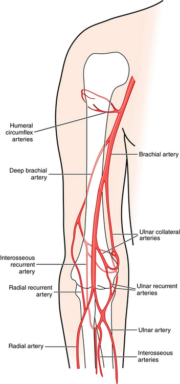 Upper Extremity Arteries Radiology Key