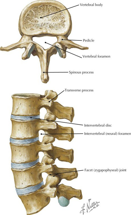 back and spinal cord | radiology key, Human body