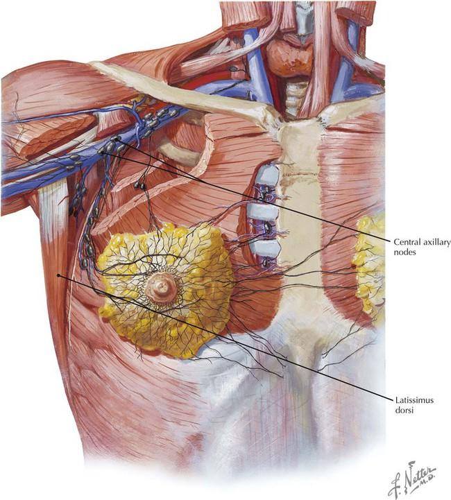Thorax Radiology Key