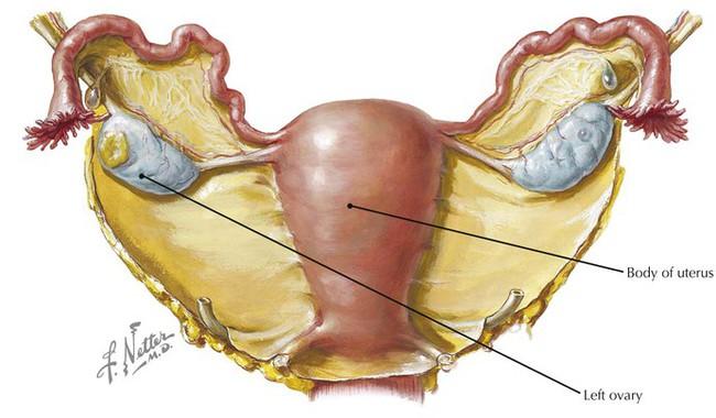 pelvis and perineum radiology key