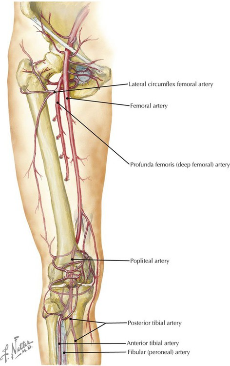 Lower Limb Radiology Key