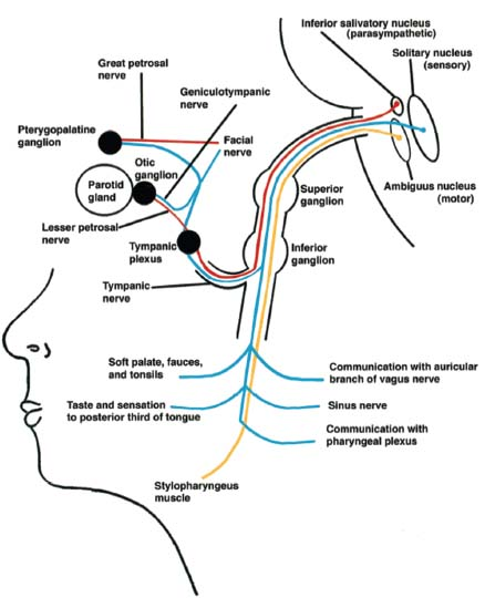Glossopharyngeal Nerve Radiology Key
