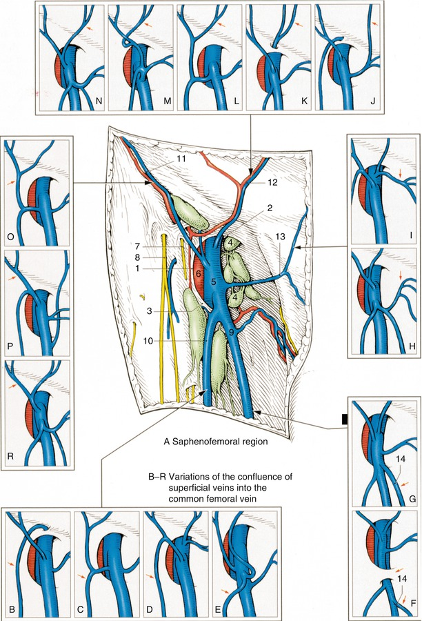 Examination Of The Great Saphenous Vein Radiology Key