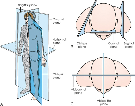 Anatomical Directional Terms And Body Planes 373204 additionally Intro To A P Ts 2013 Stds together with General Anatomy And Radiographic Positioning Terminology additionally 4236411 besides Dorsal Forearm Part 1  partment. on dorsal ventral anatomical positions