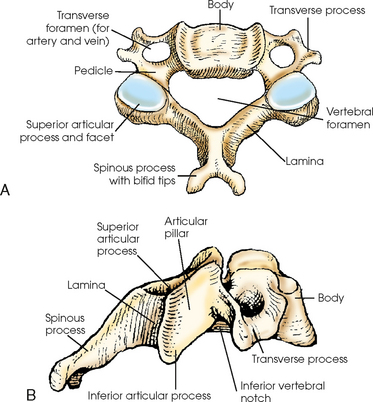 Vertebral Column Radiology Key