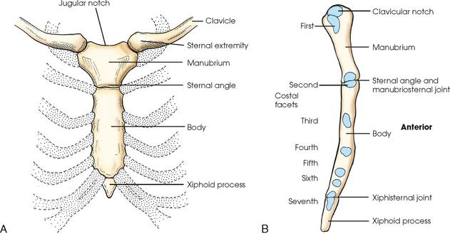 Bony Thorax Radiology Key