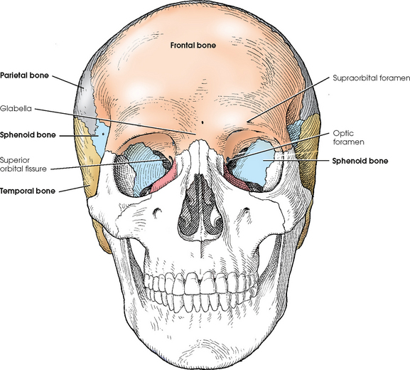 skull | radiology key, Human Body