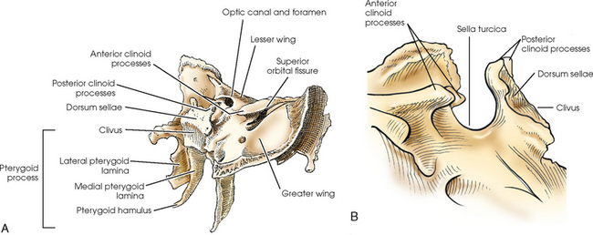 sphenoid bone lateral view – citybeauty, Human body