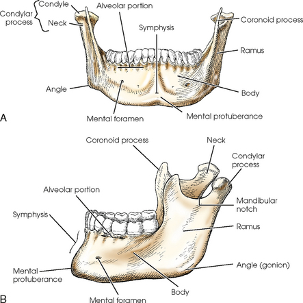 Image Gallery Mandible Labeled