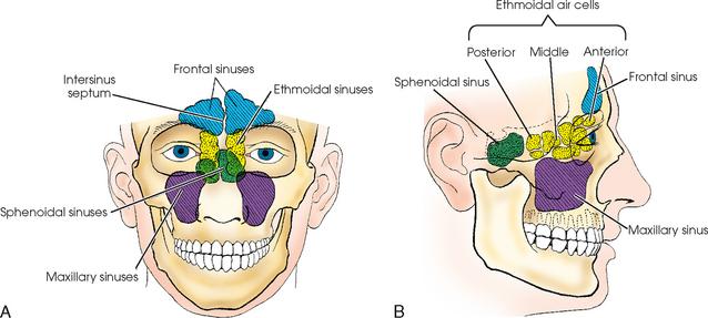 Anatomy of the paranasal sinuses
