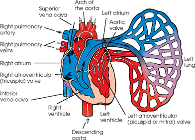 VASCULAR, CARDIAC, AND INTERVENTIONAL RADIOGRAPHY ...