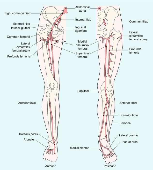 The Peripheral Arteries Radiology Key
