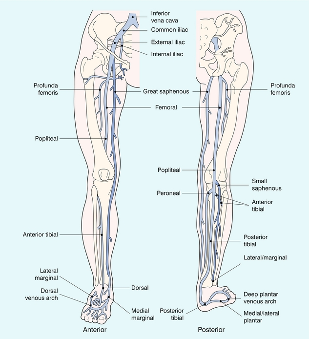 The Peripheral Veins Radiology Key