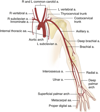 Arterial Anatomy of the Extremities | Radiology Key