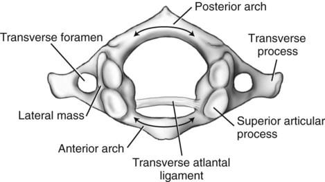 Diagram Of The Atlas Vertebra - Illustration Of Wiring Diagram •