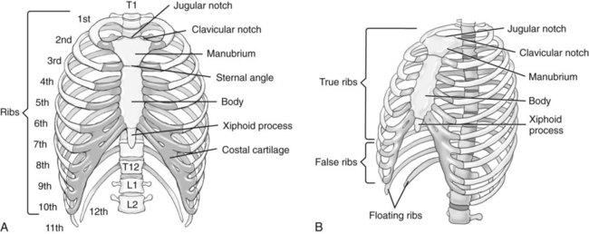 Bony Thorax Chest And Abdomen Radiology Key