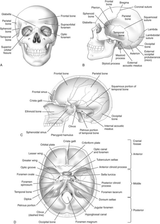 skull  facial bones  and paranasal sinuses