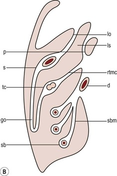 Imaging of The Peritoneum, Mesentery and Omentum ...
