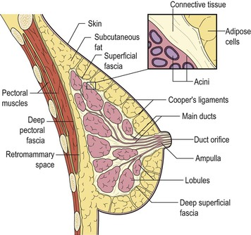 Breast tissue boundaries in dating 10