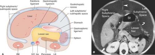 Abdomen and Pelvis | Radiology Key