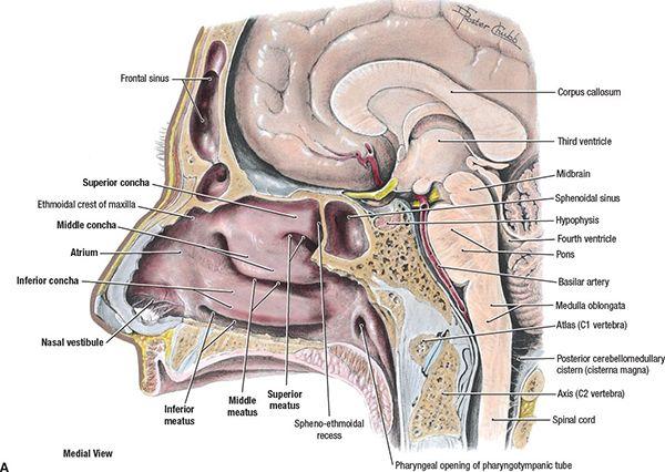 Nasopharynx Radiology Key