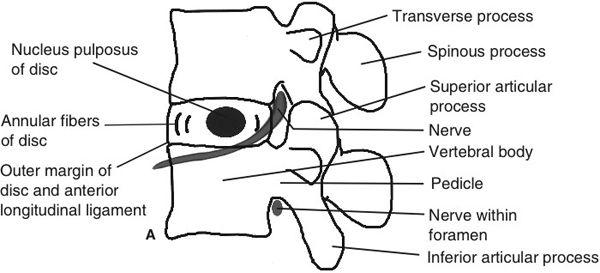 Scotty Dog Anatomy 684402 Togelmayafo