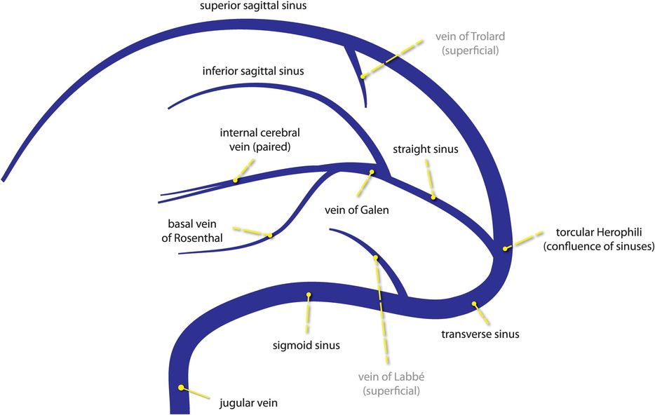 Internal cerebral vein anatomy