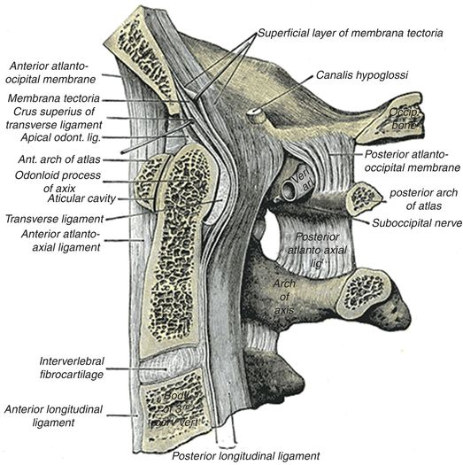 Abusive Craniocervical Junction And Spinal Trauma Radiology Key