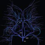 2 Normal Anatomy
