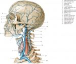 Part III Topography of the Head and Neck