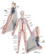 Clinical Vascular Examination