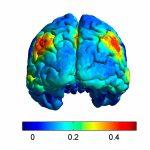 Superior Prefrontal Cortex (Area 8)