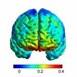 Orbitofrontal Cortex (Area 11)